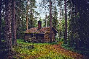 A single log cabin in the middle of a lush green forest with long skinny trees all surounding.
