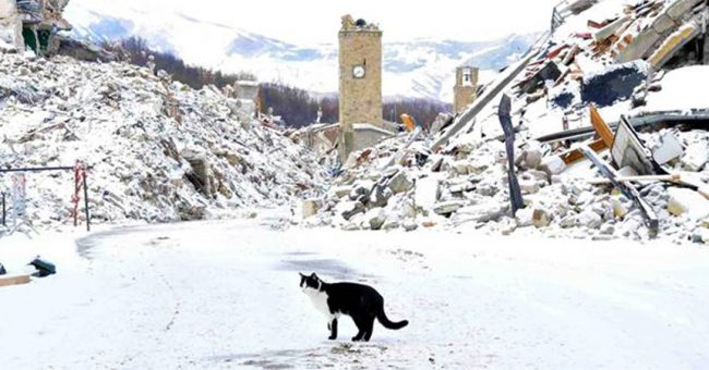 Cat in Italy, standing amongst the ruins after a devastating earthquake